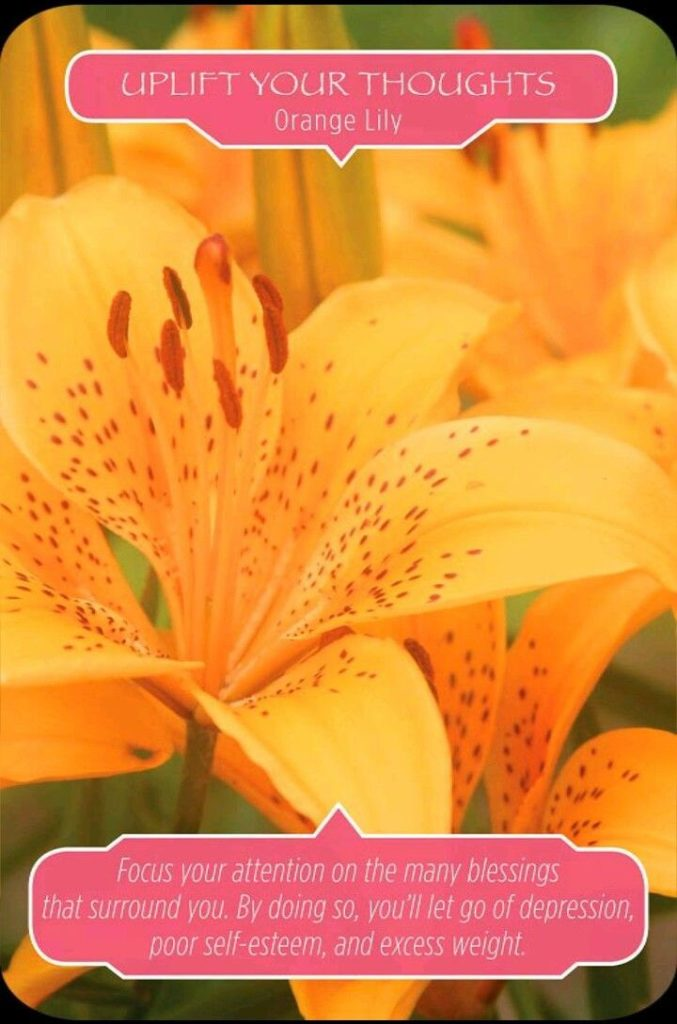Flower Therapy Oracle Bubbles Message