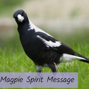 Magpie Spirit Message