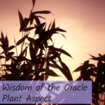Wisdom of the Oracle Plant Message